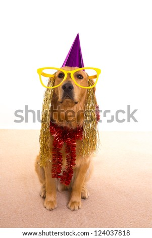 Dog party dressed  purple hat and big glasses golden retriever - stock photo