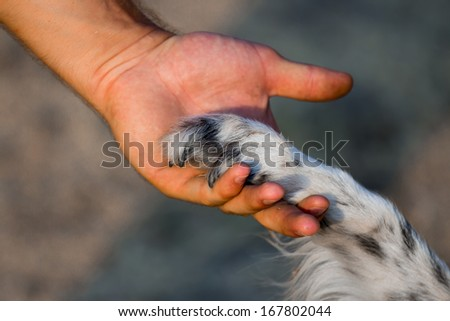 Dog paw and human hand   - stock photo