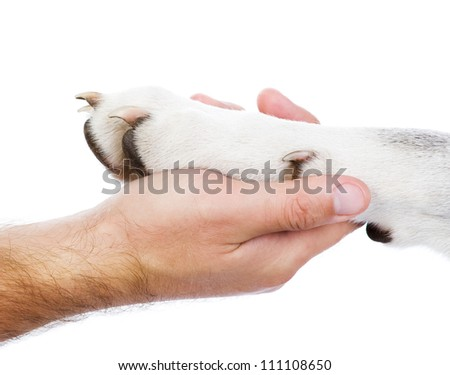 Dog paw and human hand. isolated on white background - stock photo