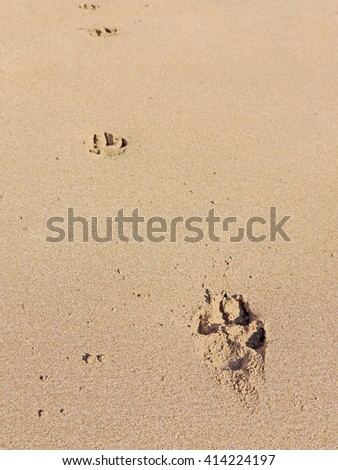 Dog paw print at the beach