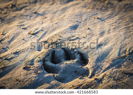 Dog paw print in the sand at the beach