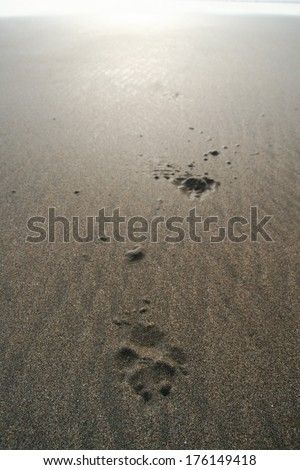 Dog paw prints in sand - stock photo