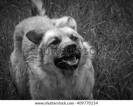 Dog paw scratching himself. Photo in black and white image