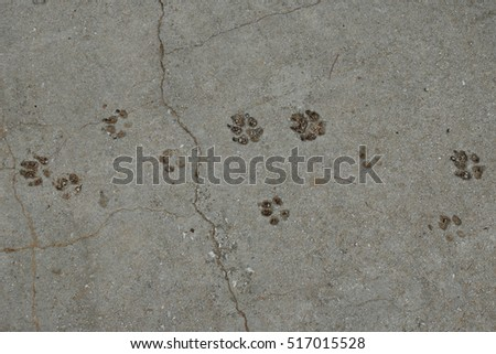 Dog paws animal tracks imprinted on concrete surface background.