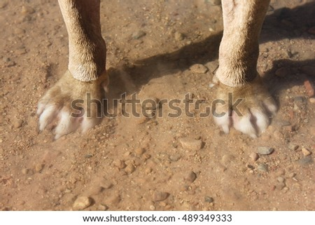 Dog Paws Underwater