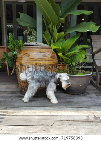 dog pee beside glazed water jar with dragon pattern on the old wood floor