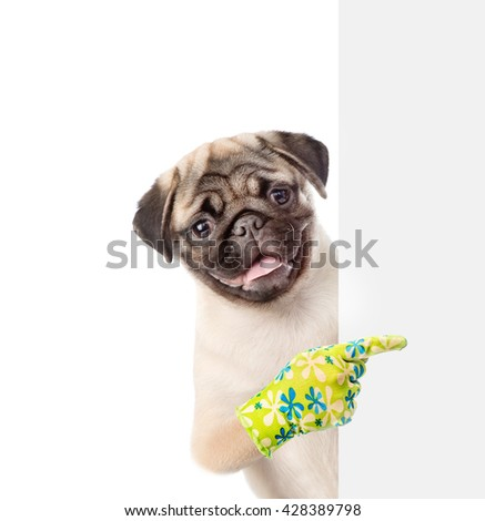 Dog peeking from behind empty board and points on empty banner. isolated on white background - stock photo
