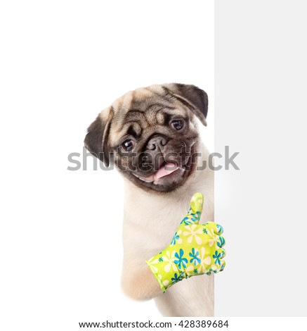 Dog peeking from behind empty board and showing thumbs up. isolated on white background - stock photo