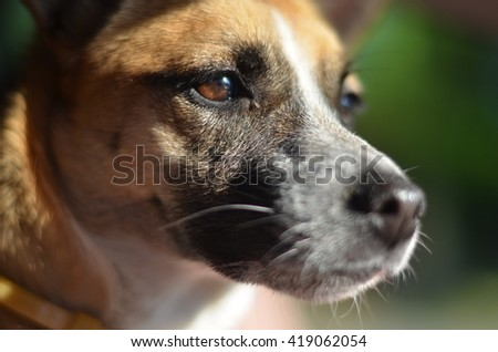 dog pet - stock photo