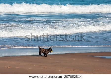 dog playing and splashing in water at the beach
