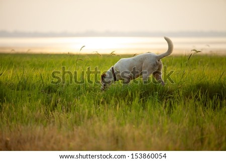 Dog playing field. - stock photo