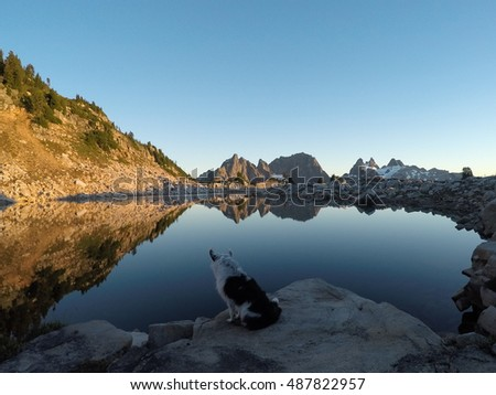 Dog playing in the Cascade Mountains, Alpine Lakes Wilderness, Washington State
