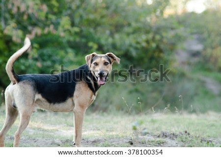 Dog playing in the green forest