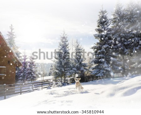 Dog playing in the snow. Mountain cottage . Winter Christmas card  - stock photo