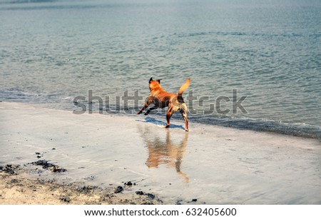 Dog Playing on Beach Running and Jumping in Water Ocean Park Outdoors