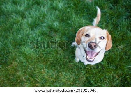 Dog playing outside smiles