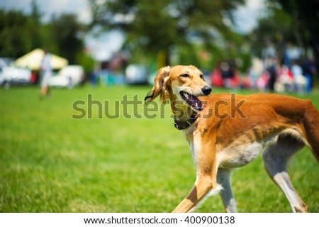 Dog playing outside smiles - stock photo