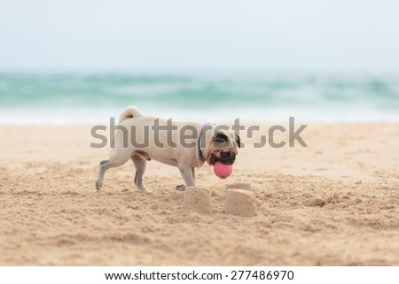 dog playing with a ball on the beach
