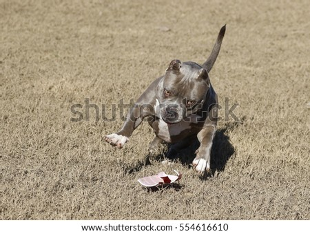 Dog playing with a cup in the field