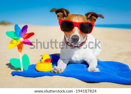dog plays with sunglasses at the beach on summer vacation holidays - stock photo