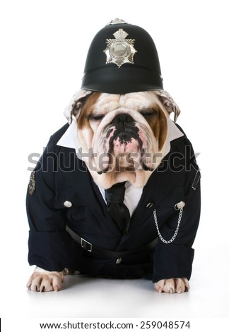 dog police or catcher - english bulldog dressed up like a policeman on white background - stock photo