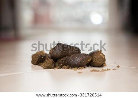 Dog poop on the kitchen floor  - stock photo