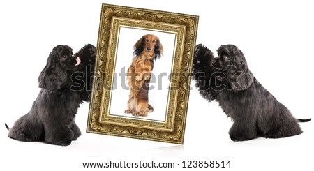 dog portrait in a gold frame - stock photo