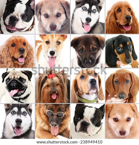 Dog portraits collage - stock photo