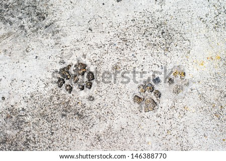 Dog prints on cement floor background