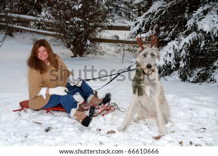 dog pulling owner on sled