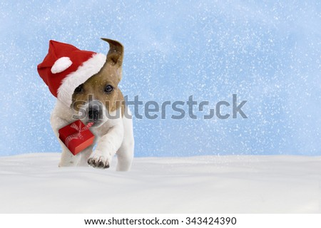 Dog, puppy, Jack Russel Terrier with santa hat jumping in the snow with blue sky