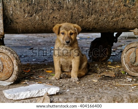 Dog puppy living under a garbage container. A young dog living under a garbage container in the Indian capital Delhi.