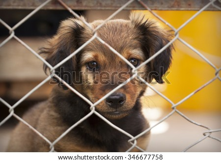 Dog puppy looking behind a fence