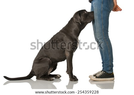 Dog Sniffing Stock Images Royalty Free Images Amp Vectors