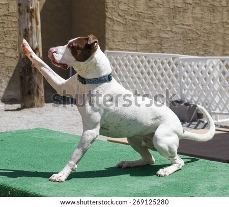 Dog raising his paw in the air for a high five - stock photo