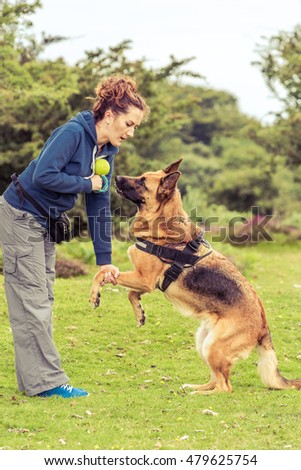 dog react wrong to trainer command at training session of obedience