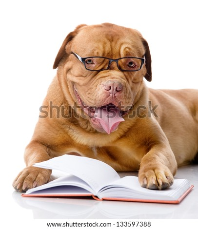 dog read book. isolated on white background