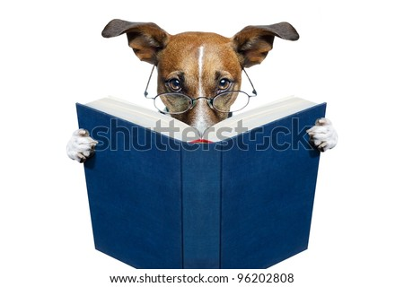 dog reading a book - stock photo