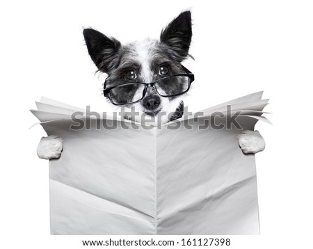 dog reading and holding a blank newspaper - stock photo