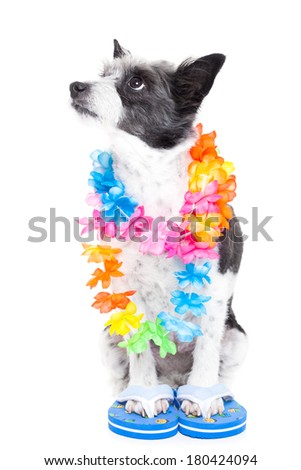 dog ready to go for summer holidays looking up to banner or owner - stock photo