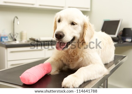 Dog Recovering After Treatment On Table In Veterinary Surgery - stock photo