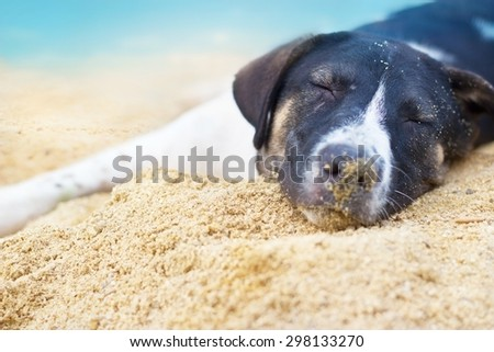 dog relax sleeping on the sand beach summer day