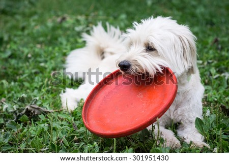 Dog relaxing in the garden with his disc - stock photo