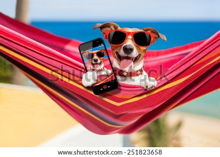 dog relaxing on a fancy red  hammock taking a selfie and sharing the fun with friends - stock photo
