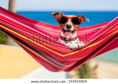 dog relaxing on a fancy red  hammock  with sunglasses - stock photo