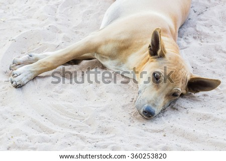 Dog relaxing on her bed - stock photo