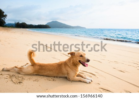 Dog relaxing on sand tropical beach near the blue - stock photo