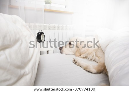 Dog resting in bed - stock photo