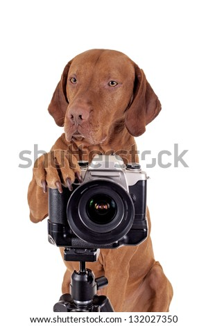 dog resting its paw on camera - stock photo