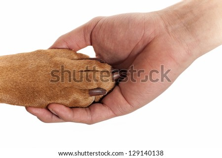 dog resting paw in human palm isolated on white background - stock photo